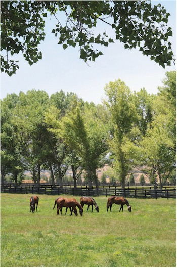farmstory